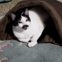 Appling's Family Pets - Cats Training & Travels - Flower