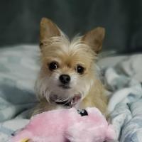 Scruffy Dog Report