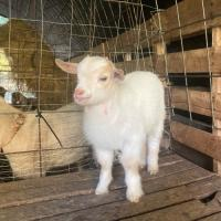 Homesteading support