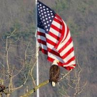 Proud Patriots of America