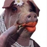 """RCPP (Red C """"Pinko"""" Pig)"""