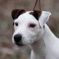 The Dog Lady Pet Salon and Spa