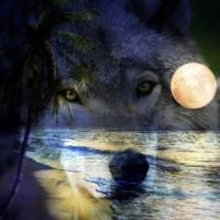 Gods Wolves Wild and Beautiful ?