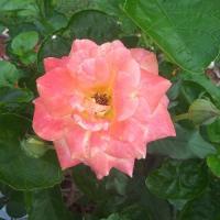 Brevard County Florida Gardening