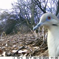 Trail Cam Pics and Videos