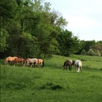 Eastern Iowa Horses and Tack For Sale