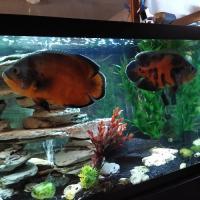 Tropical Fish Raising