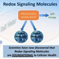 CellSoma health rejuvenated at the cellular level!