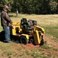 Henderson Stump Grinding