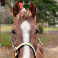 Homeward Horse and Hound of Mississippi