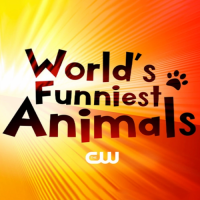 World's Funniest Animals On The CW