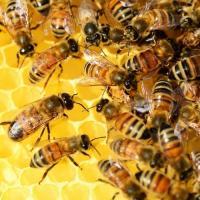 Georgia Bee Keepers