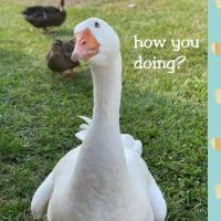 Duck, Duck, Goose, Chicken