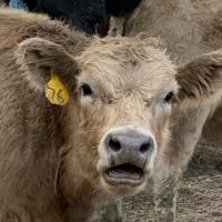 D n S Livestock