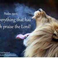 PTL's & Hallelujah's