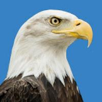 Daily Eagle
