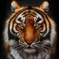 TigerettaRose